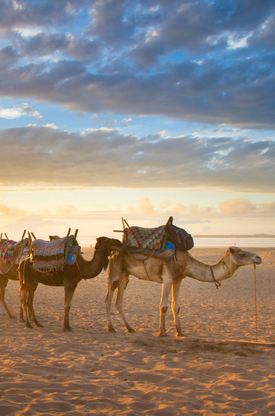 5. Go camel trekking in Morocco. Climb aboard and follow the ancient caravan routes that brought people and goods across the vast, orange sands of the Sahara desert. Your adventure begins with an excursions to the beaches of Tangier. Bucket list: ride a camel across the desert - check!