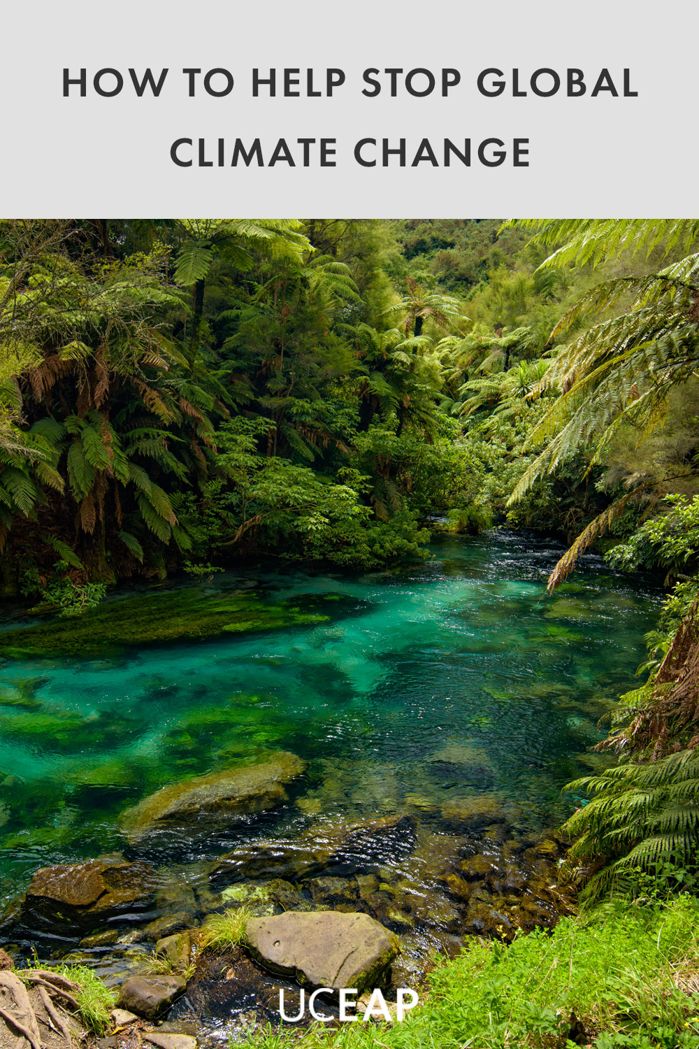 Blue Spring, the river with the purest water in New Zealand, Te Waihou Walkway, Hamilton, Waikato