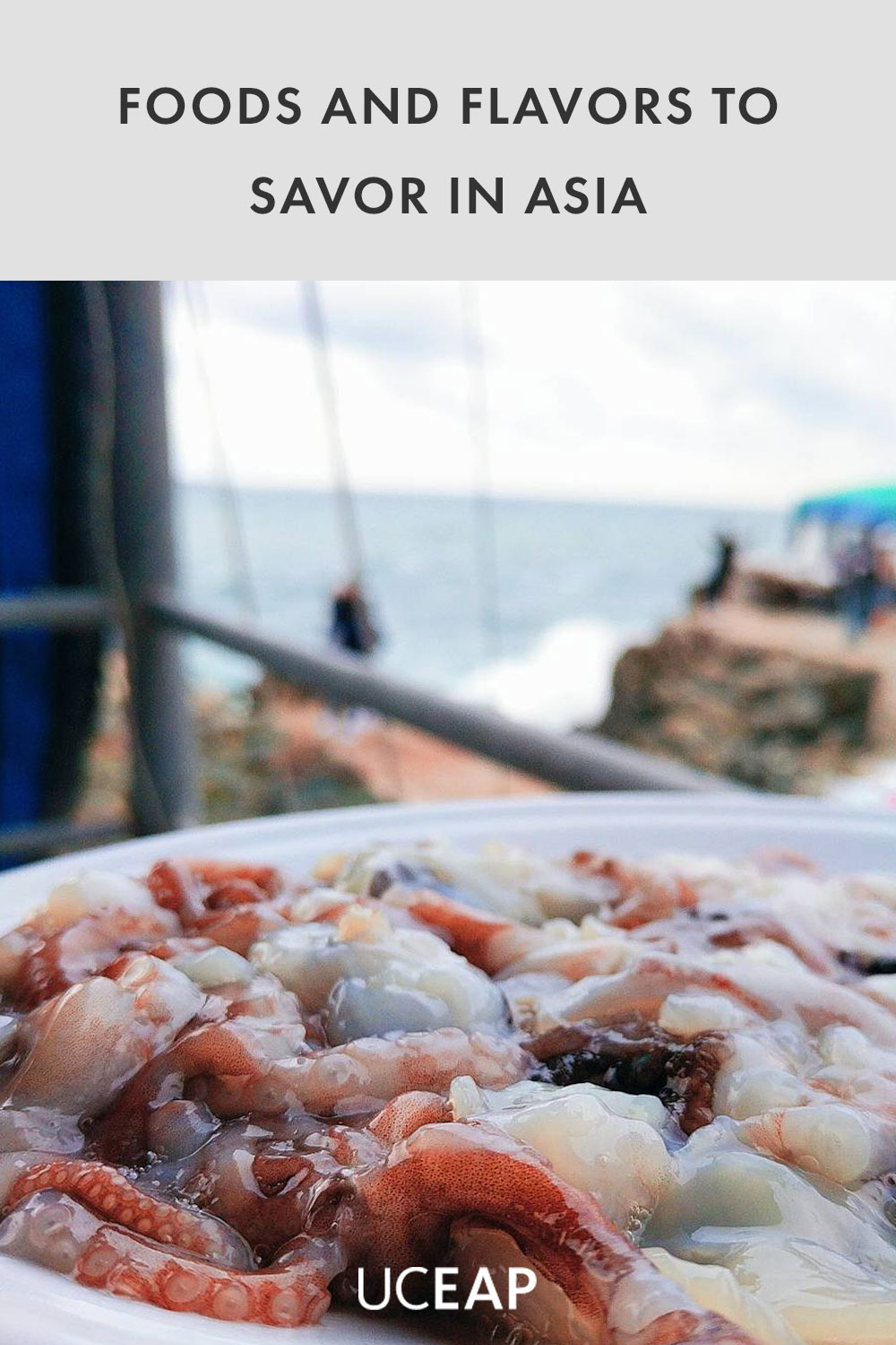 Close up shot of Octopus with a view of the water in Busan South Korea